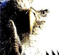 aguia2.jpg