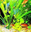 aquario13.jpg