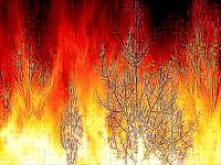 incendio_forestal320.jpg