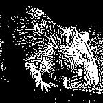 ratos-1.jpg
